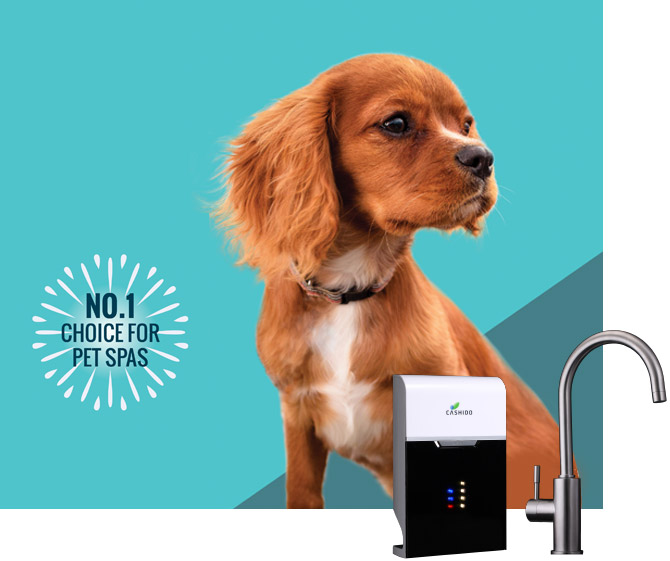 loop_product_commercial_pets